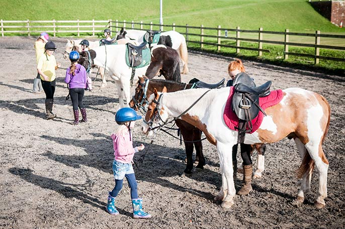 Horse Riding Lessons For Children And Adults At Fort